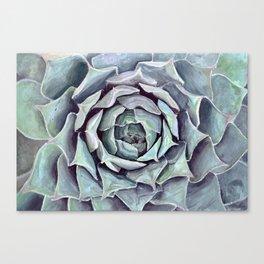 Succulent Painting Canvas Print