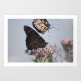 Monarch Butterfly XVIII Art Print