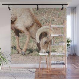 Watercolor Sheep, Bighorn Ram 05, Fall River, RMNP, Colorado, Road-side Wall Mural