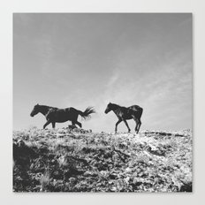 Pryor Mountain Wild Mustangs Canvas Print