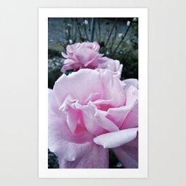 Fading rose Art Print