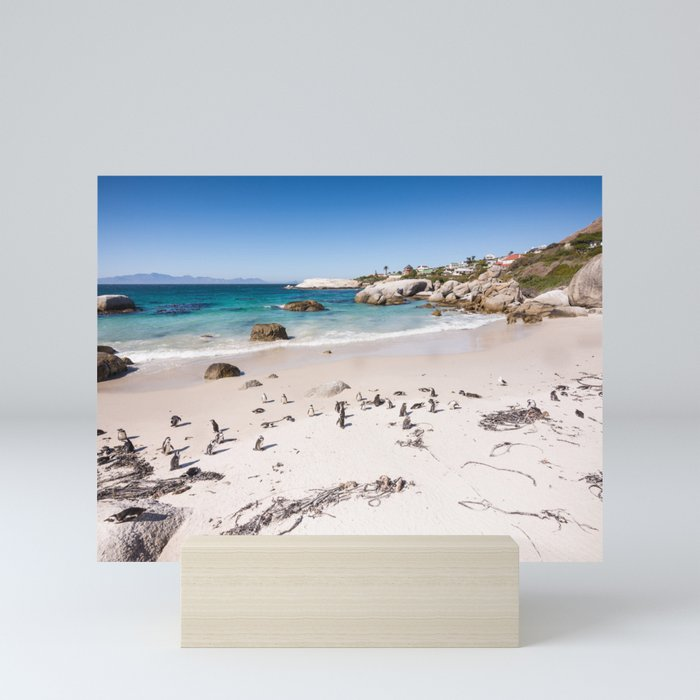 Penguins on Boulders Beach in Cape Town, South Africa Mini Art Print