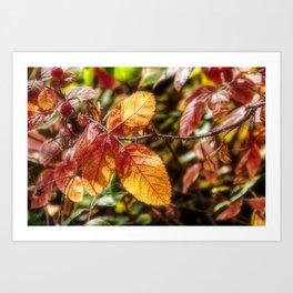 Rose Leaf in Sunlight Art Print