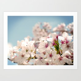 Spring, Flower Photography, Pastel, Pink, Romantic Cherry Blossom, Art Deco - 8 x 10 Wall Decor Art Print