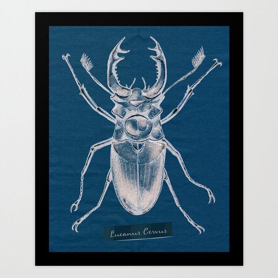 Stag Beetle - Lucanus Cervus Art Print
