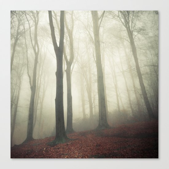 forest in fog Canvas Print