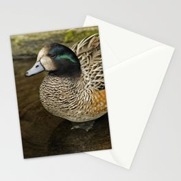 Chiloe Wigeon Stationery Cards