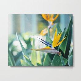 Bird of Paradise Photography, Green Orange Aqua Blue, Tropical Flower Nature Botanical Metal Print
