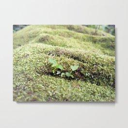 Moss forest Metal Print