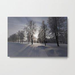 trees in the park Metal Print