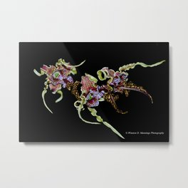 Dendrobium Spectible (The Alien Orchid) Metal Print