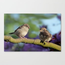 Two birds on a tree Canvas Print
