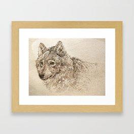 The Gray Wolf's Gaze Framed Art Print
