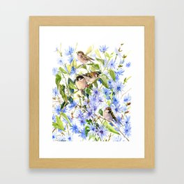 Sparrows and Chicory Flowers Framed Art Print