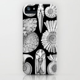Sea Shells and Fossils (Ammonitida) by Ernst Haeckel iPhone Case