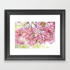 pink dogwoods Framed Art Print