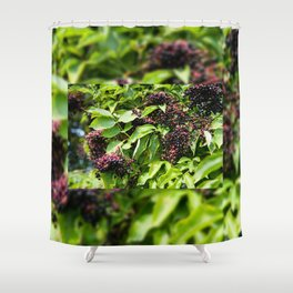 Elderberry fruits fresh clusters Shower Curtain