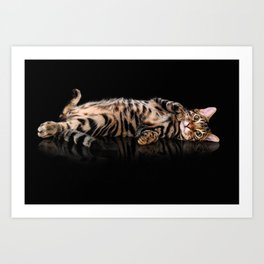 Bengal cat / Kitten on black Art Print