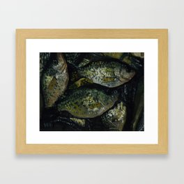 A Crappie Day Framed Art Print