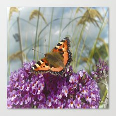 Butterfly Days Canvas Print