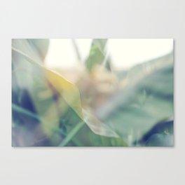 Paradise 2 Canvas Print