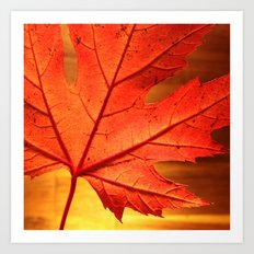 maple leaf - square Art Print