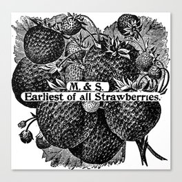 Earliest of all Strawberries 1899 Canvas Print