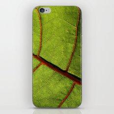 Leaf Veins II iPhone & iPod Skin