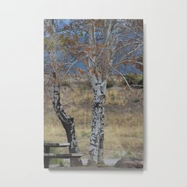 White Birch & Picnic Table Metal Print