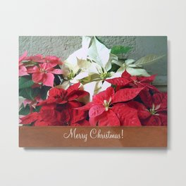 Mixed color Poinsettias 3 Merry Christmas S1F1 Metal Print