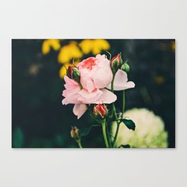 Flower in the wind Canvas Print