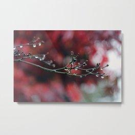 November Rain and Acer Bokeh Metal Print