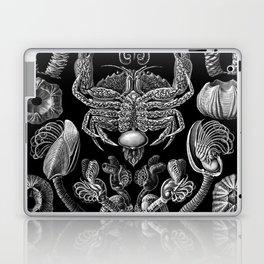 Ernst Haeckel Cirripedia Barnacles Crabs Laptop & iPad Skin