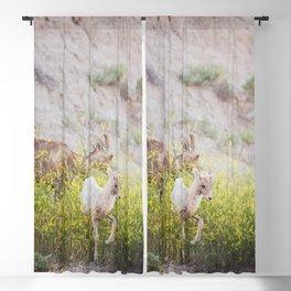 Badlands Bighorn Sheep Lamb - Wildlife Photography Blackout Curtain