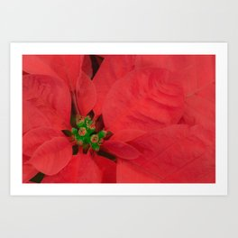A Flower That Blooms In Red Art Print