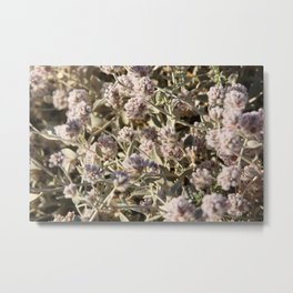Outback flowers Metal Print
