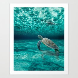 Turtle in Clear Waters Art Print
