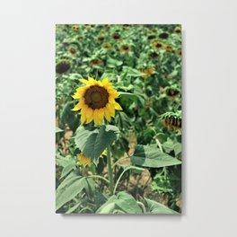 Flower No 6 Metal Print