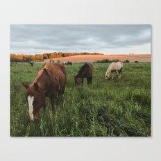 Driftless horses Canvas Print