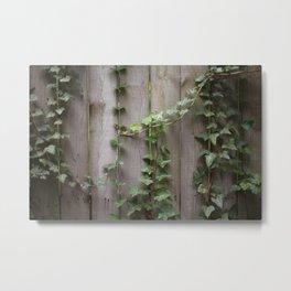 Vines on Wooden Fence Metal Print
