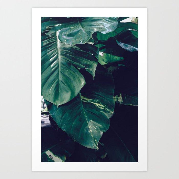 Green Leaves Bali Travel Photography Art Print By Shigatha