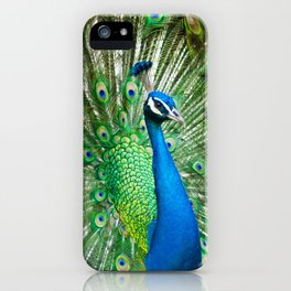Beautiful Male Peacock iPhone Case