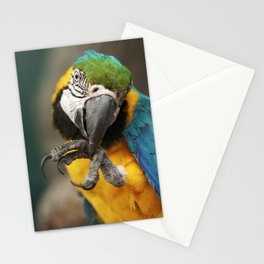 Parrot Ara Macao Cleaning Its Foot Stationery Cards