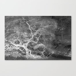 Infrared Japanese Maple Tree on Hill Top Abstract Landscape Photograph Canvas Print