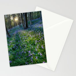 Bluebell sunset at Margam woods Stationery Cards