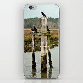 Four Cormorants iPhone Skin