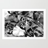 Leopard Orchid black and white Art Print