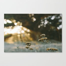 Faded. Canvas Print