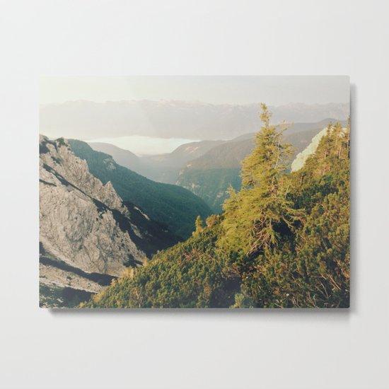 Morning mountain pine Metal Print