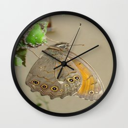 Meadow Brown Butterfly Feeding On Aphids Wall Clock